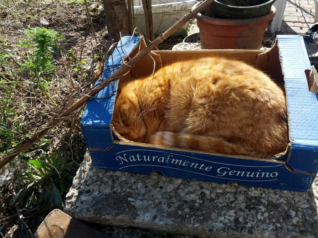 Gatto naturalmente genuino
